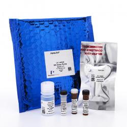 PerkinElmer - AL508C - Albumin (mouse) AlphaLISA Detection Kit, 500 Assay Points