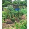 Gardman - 7661 - Fruit Cage Medium