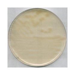 EMD Millipore - 1004160500 - AGAR R2A 500GM (Each)