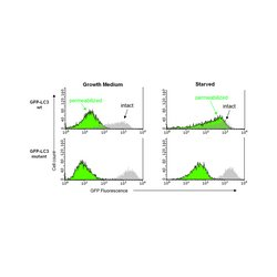 EMD Millipore - 17-10230 - LentiBrite GFP-LC3-II Enrichment Kit (Flow Cytometry)