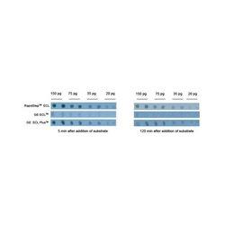 Emd Millipore - 345818-100ml - Rapidstep Ecl Reagent 100ml (each)