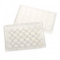 Chemglass - 229107 - Celltreat Tissue Culture Treated Plates w / Glass Bottom