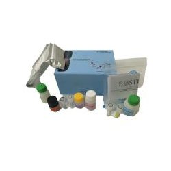 Boster Bio - Ek0327 - Human Egfr Picokine Elisa Kit (each)
