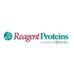 Reagent Proteins - ATG-422-A2 - Recombinant Circumsporozoite Protein (rCSP) rCSP (Each (50 G))