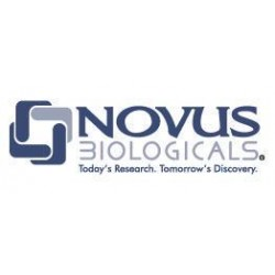 Novus Biologicals - NBP1352600.1ML - Rabbit Polyclonal anti-Beta Actin Antibody, Novus Biologicals (NBP1-35260) (Each)