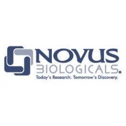 Novus Biologicals - NBP1353000.5ML - Rabbit Polyclonal anti-beta Amyloid Antibody, Novus Biologicals (NBP1-35300) (Each)