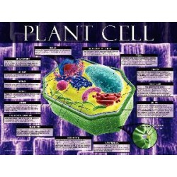 Jaguar Educational - 03-PS05-1 - POSTER ANIMAL CELL (Each)