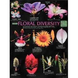 Biocam - Wc44 - Chart Floral Diversity 18x24 Lam (each)