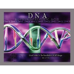 Jaguar Educational - 03PS1012L - POSTER DNA 18X24 LAMINATED (Each)