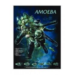Biocam - Wc 58 - Poster Amoeba Laminated (each)