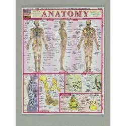 BarCharts - 1572224517 - Quick Study Guides Chart, Quick Study, Chemistry, 22 cm x 28 cm (Each)