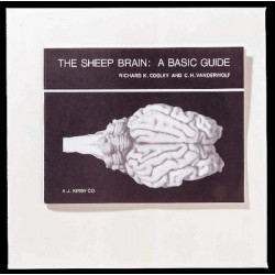 Matrix Scientific - 321139 - Book Sheep Brain Basic Guide(r Cooley) (each)