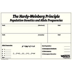 Matrix Scientific - 330888 - Hardy-weinberg Dry Erase Board (each)