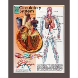 Jaguar Educational - 03ps121l - Chart Systems Of The Human Body Set/4 (kit Of 1)