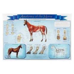 Matrix Scientific - 332815 - Anatomy of the Horse Chart Anatomy of the Horse Chart (Each)