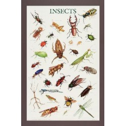 Matrix Scientific - 39024-1 - Insects Poster Insects Poster (Each)