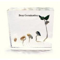 Matrix Scientific - T110 - Embedment Bean Germination (each)