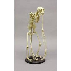 Bone Clones - Sc-047-a - Model Gibbon Skeleton. (each)