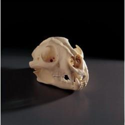 Bone Clones - Bc-015 - Model Cougar Skull. (each)