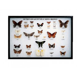 White Owl - 670031 - Butterflies & Moths Of Namerica Rkrmt (each)