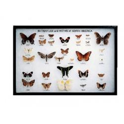 White Owl - 670031 - Butterflies & Moths Of Namerica Rkrmt (each)