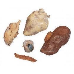 Other - 150-0059.1 - Mammalian Anat Set W/pig 5/st Mammalian Anat Set W/pig 5/st (kit Of 5)
