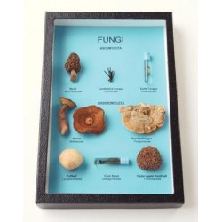 White Owl - R168 - Fungi Comparison Riker 8 Types Of Fungi (each)