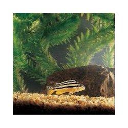 Vwr - 878095 - African Aquatic Fish Set African Aquatic Fish Set (kit Of 1)