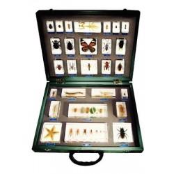 Matrix Scientific - Te-270-each - Embedment Invertebrate 27 Piece Set (each)
