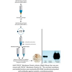 G Biosciences - 786-249 - Membrane Proteins Focus 2d Elp 50preps (each)