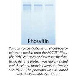 G Biosciences - 786-255 - Kit Focus Phosphorich 5preps (each)