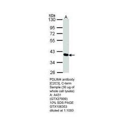 Genetex - GTX106353 - RB PAB TO PDLIM4 (Each)