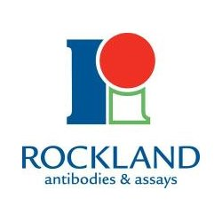 Rockland Immunochemical - 000-000-264NP - NFKB P65 (REL A) S276 CONTROL (Each)