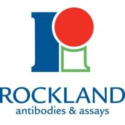 Rockland Immunochemical - 001-0102 - Purified Bovine Proteins and Conjugates, Rockland Immunochemicals Whole IgG (Each (50mg))