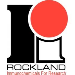 Rockland Immunochemical