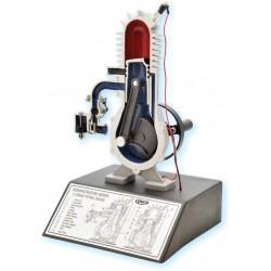 Eisco Scientific - ENGINEMODELSET - Engine Model Set of 3, Four Stroke Diesel - Four Stroke Gas - Two Stroke Diesel