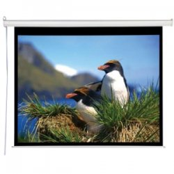 "Draper - 800007 - Draper AccuScreens Projection Screen - 59"" x 105"" - Matte White - 119"" Diagonal"